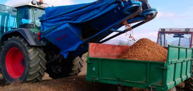 Asaja confirma la reducción en un 60% de la cosecha de almendra en Almería