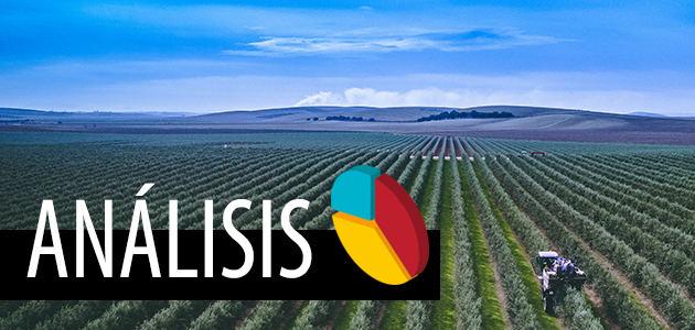 Precios del aceite de oliva en España: situación y soluciones