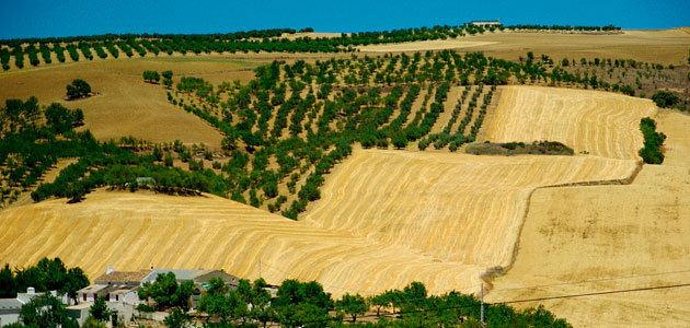Impacto del cambio climático sobre el olivar andaluz
