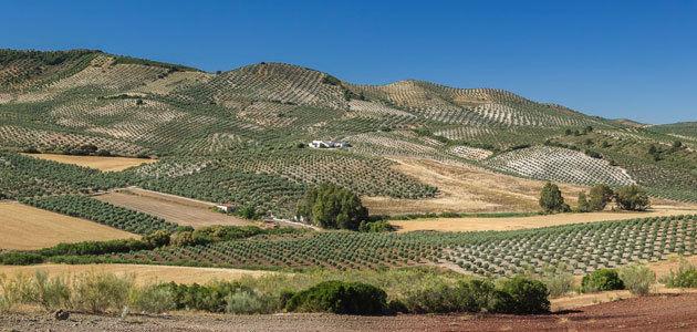 Predicen la variabilidad de la aridez y sus efectos en la agricultura