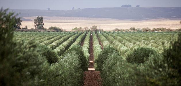 Life Resilience: prevención de la Xylella fastidiosa en explotaciones de alta densidad de olivar y almendro