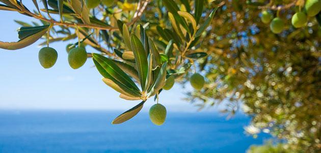 Artolio, un proyecto para ayudar a los pequeños productores de aceite de oliva del Mediterráneo