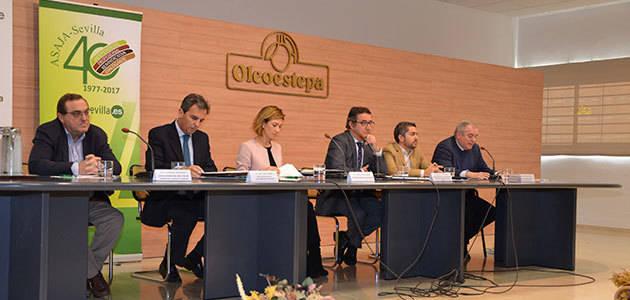 La calidad, la reconversión, la internacionalización y la innovación son las señas de identidad del olivar español