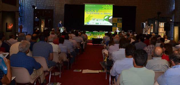 Asaja-Sevilla rebaja su aforo de producción nacional de aceituna de mesa a 529.000 t.