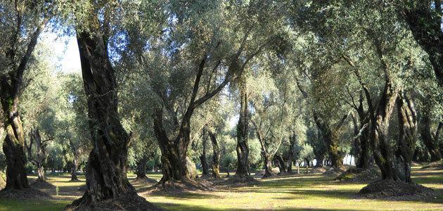 Aceite de orujo de oliva: vocación alimentaria, investigación y sostenibilidad para relanzar el sector en Italia