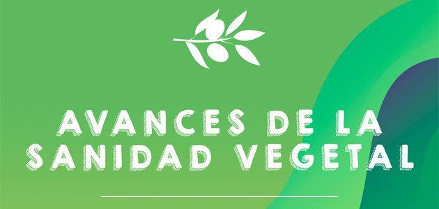 Últimos avances del olivar en el campo de la sanidad vegetal