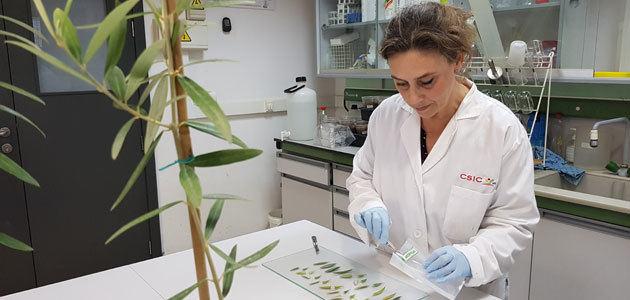Avances en el desarrollo de una estrategia de control y erradicación de la Xyllela fastidiosa en España