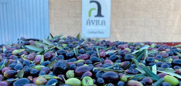 Ávila impulsa el aceite de oliva del Tiétar con el objetivo de lograr la primera DOP de Castilla y León