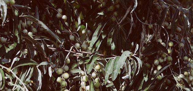 Nuevas ayudas para la biomasa y para la integración en el sector agroalimentario