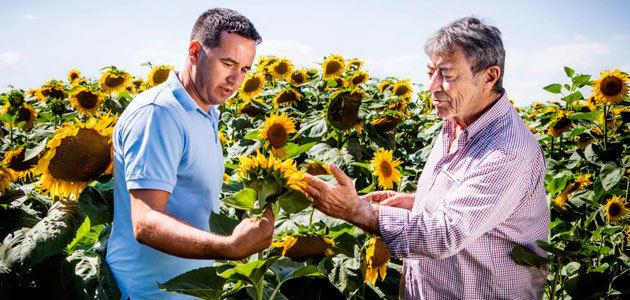 BASF entra en el mercado de las semillas de girasol