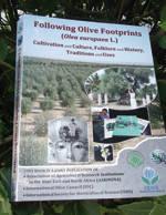 Following Olive Footprints, la relación entre el olivo y el hombre