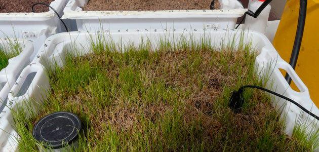 Utilizan residuos del aceite de oliva para eliminar restos de fármacos en aguas residuales