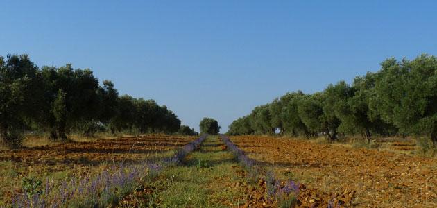 Tendencias de biodiversidad en los cultivos