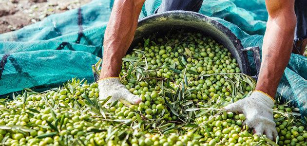El proyecto Atresbio analizará las capacidades andaluzas para la bioeconomía en el olivar