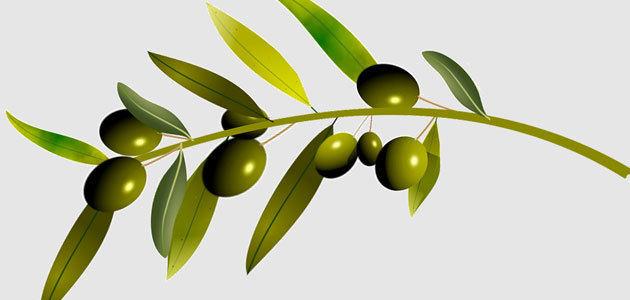 El BOE publica el Real Decreto que permitirá la autorregulación del sector del aceite de oliva