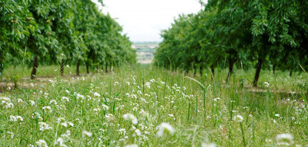 Borges refuerza su apuesta por la biodiversidad en el entorno agrario