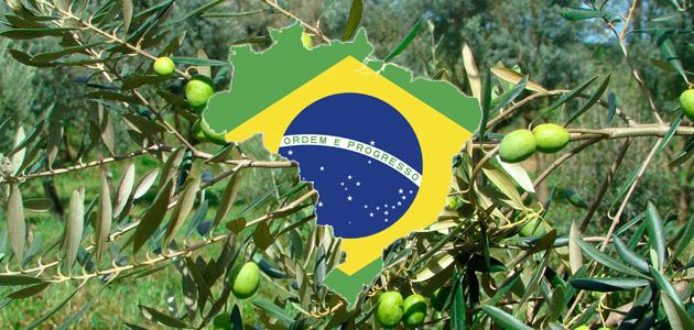 Las importaciones brasileñas de aceite de oliva crecen un 28% en la última campaña y alcanzan valores máximos