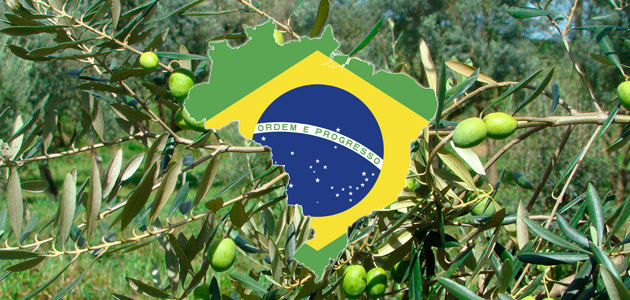 Récord de las importaciones de aceite de oliva de Brasil en 2020 con más de 110.000 t.