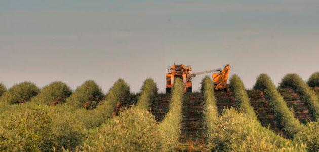 California examina el correcto etiquetado de sus aceites