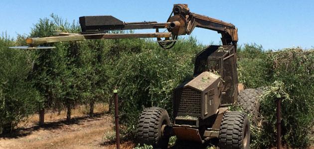 La olivicultura en el continente americano: muy cambiante y profundamente influida por las condiciones climatológicas