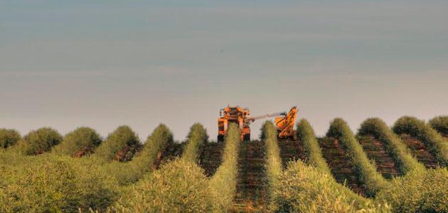 La OOCC certifica a los productores que cumplen con su norma de calidad para 2020/21 en California