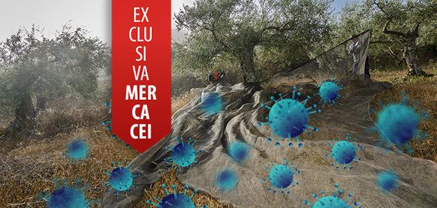 Primera campaña oleícola en tiempos de COVID-19: balance, retos y oportunidades