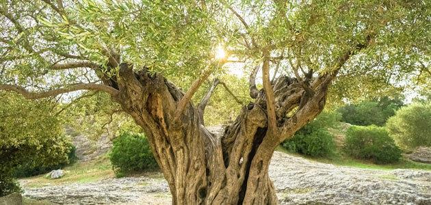El COI y el Ciheam organizan un curso sobre olivicultura y cambio climático