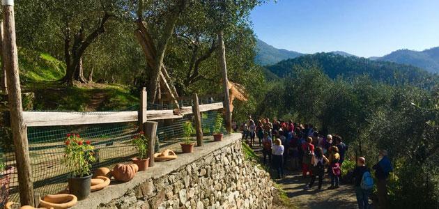 Caminando entre olivos: 84 ciudades italianas se unen para descubrir el origen del oro verde