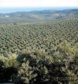 Aprobado el procedimiento de evaluación de productos fitosanitarios