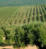 El Magrama presenta las bases de ayudas a explotaciones agrarias para paliar los efectos de la sequía