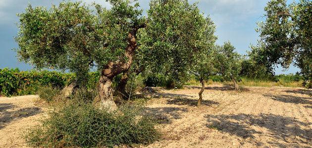 Cerca de 700.000 agricultores recibirán 4.954 millones de euros en ayudas directas de la PAC 2020