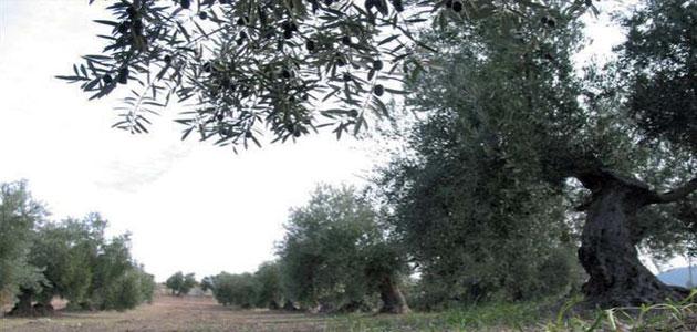 Un proyecto europeo plantea aprovechar los residuos agrícolas para producir nuevos subproductos