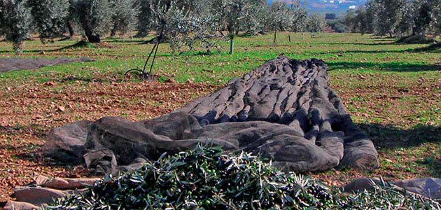 El sector del olivar invierte la tendencia general e incrementa su superficie agrícola un 3,7% entre 2013-2016