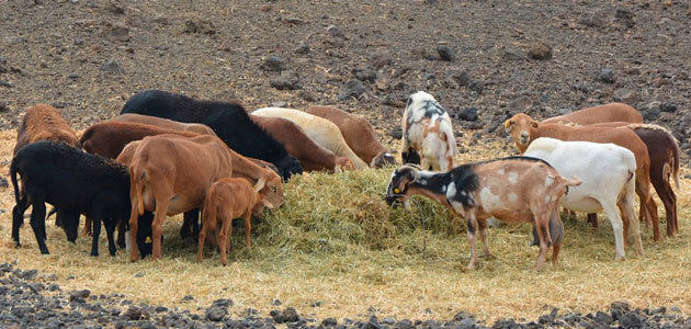España podrá exportar a China pasta de aceituna para alimentación animal