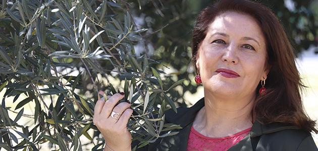 El gran bosque de olivos de Andalucía