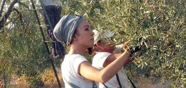 La CHG aprueba un proyecto de la SAT Santa Teresa para convertir 1.000 has. de olivar en regadío