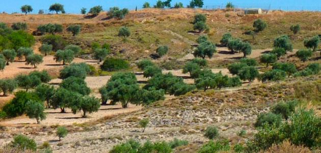 Las plantas que crecen en suelos ricos en yeso son resistentes a la actividad del ser humano