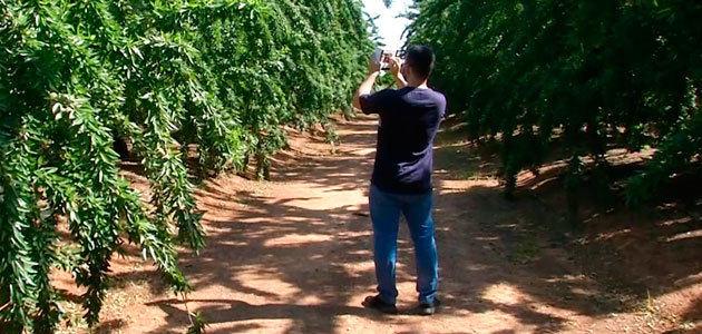 Control Inteligente de Termografía (CIT), un proyecto para optimizar el riego en cultivos como el olivar