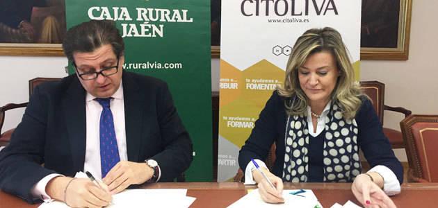 Citoliva y la Fundación Caja Rural de Jaén avanzan en la mejora de la calidad de los aceites de oliva