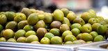 Campaña de aceituna de mesa: el COVID-19, la meteorología y la Ley de la Cadena Alimentaria marcan la recolección