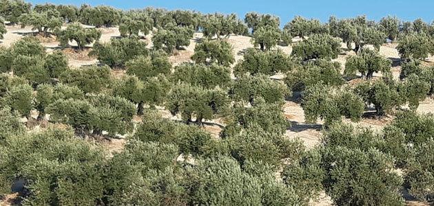 COAG-Jaén alerta de una pérdida