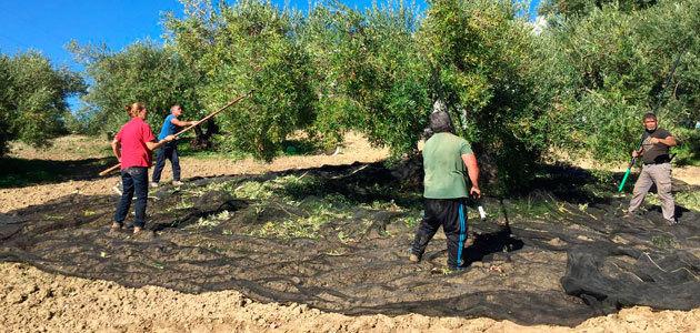 COAG-Andalucía reclama transparencia para que el olivar no se vea sometido a prácticas especulativas