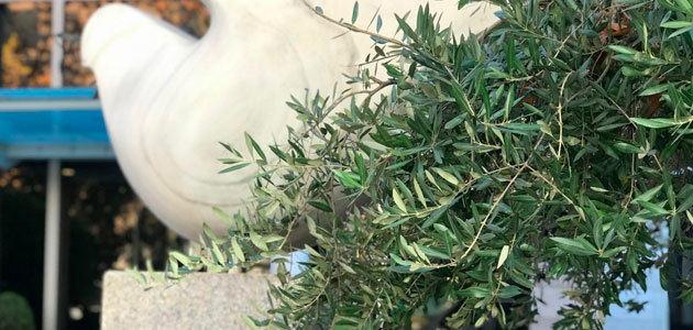 El COI prevé que la producción mundial de aceite de oliva se sitúe en 3,19 millones de toneladas esta campaña