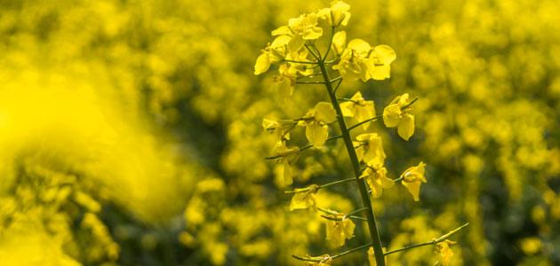 El índice de precios de los aceites vegetales de la FAO alcanza el nivel más bajo desde 2007