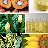 Los aceites y grasas vegetales. Producción, impacto en nuestra dieta y perspectivas de futuro