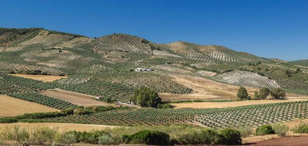 Andalucía producirá esta campaña entre un 60 y un 65% de toda la oferta europea