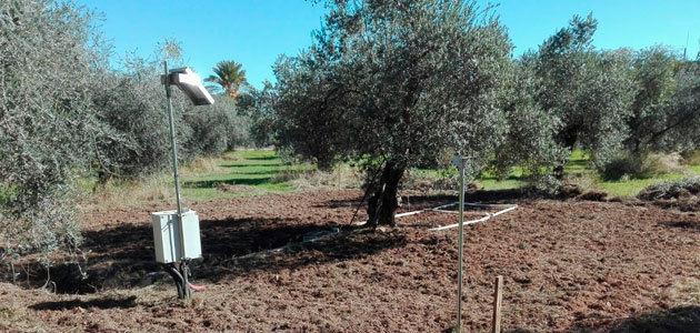 Corrientes eléctricas para medir la humedad del suelo del olivar