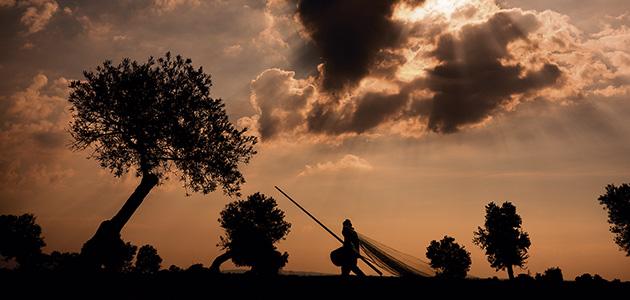 AEMO actualiza a 2020 su 'Estudio de Costes del Cultivo del Olivo'