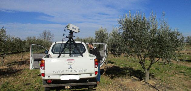 La tecnología al servicio del olivar para optimizar rendimientos y predecir la producción