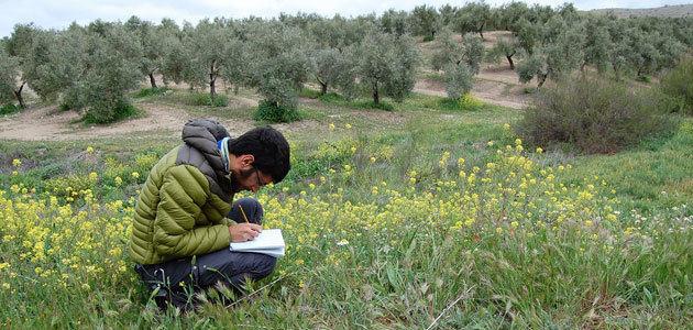 Investigadores de la UJA consideran esencial el manejo extensivo de cubiertas vegetales de olivar para incrementar la diversidad de especies